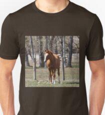 Chestnut Horse T-Shirt