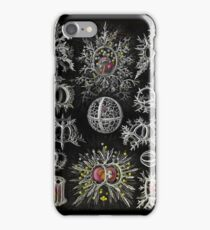 Stepoidea Radolarian iPhone Case/Skin