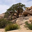Tree Among the Boulders by Lucinda Walter