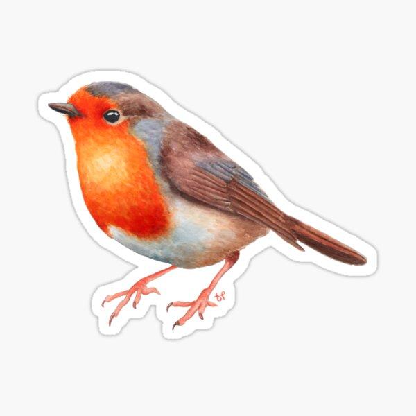 Robin Redbreast Sticker