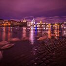 Swans in Vltava river in Prague by george papapostolou
