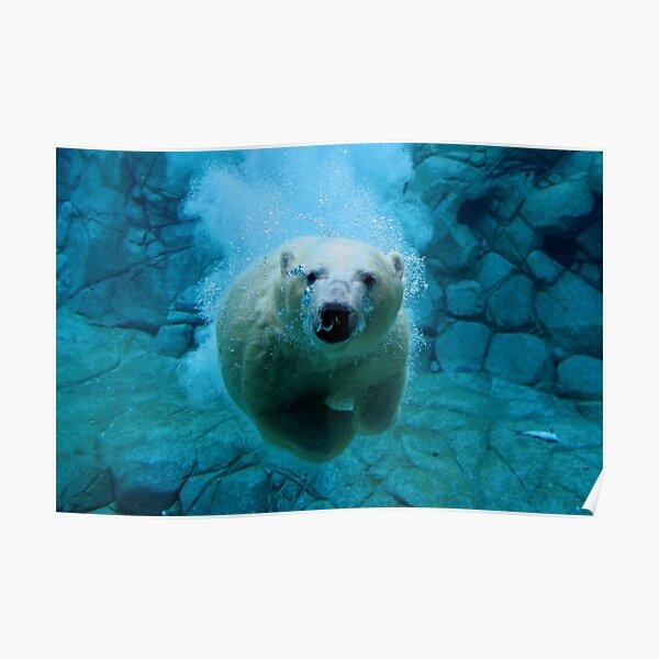 Eisbär-Tauchgang Poster