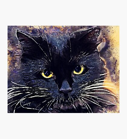 Cat Lucy Photographic Print