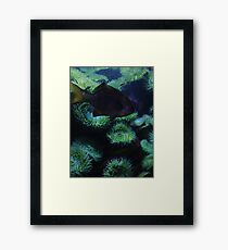 Aquatic Scene Framed Print