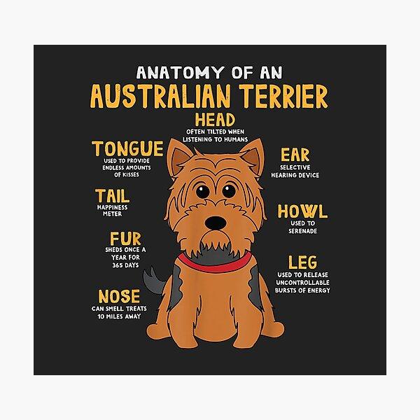 Australian Terrier Anatomy Funny Dog Mom Dad Cute Gift Photographic Print