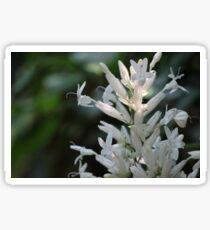 Gentle White Flower Sticker