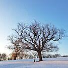 Solo Tree by BWootla