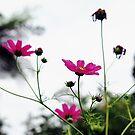 Pink Anemones by Karen E Camilleri