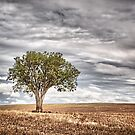 The lonely Tree by David J Baster