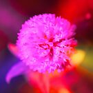 Flower by cloude-vigal