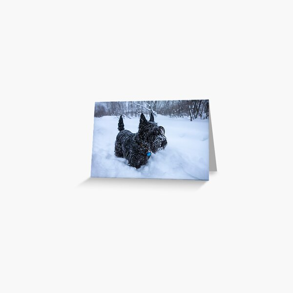 Scottish terrier in a winter snow Greeting Card