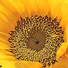 Artsy Sunflower by Gilda Axelrod