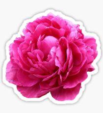 Pink peony Sticker
