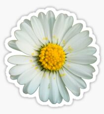 White daisy Sticker
