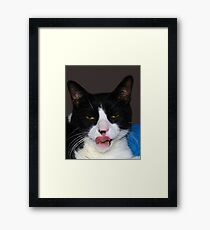 HUNGRY TUXEDO CAT Framed Print