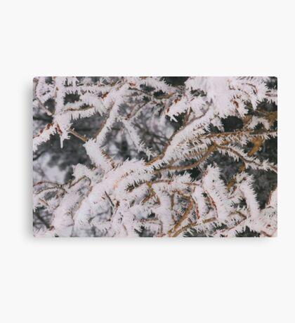 Frosty Needles of Ice Canvas Print