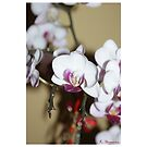 Beautiful Orchid Flower of Mine by Kristine Themsen
