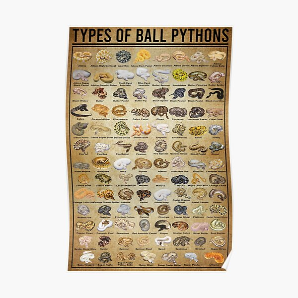 Types Of Ball Pythons, Pythons Knowledge, Pythons Lover  Poster