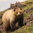 Grizzly & Wildflowers by WorldDesign