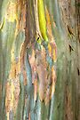 Green Bark by Werner Padarin