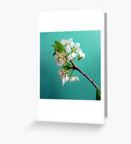 Still Life with Spring Greeting Card