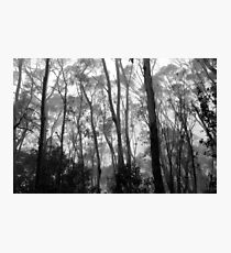 Listen To The Trees Photographic Print