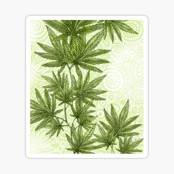 Hemp Plant on Green Spirals Sticker