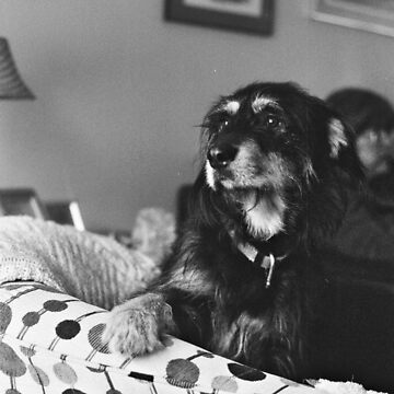 Dexter in Black and White by jondenby