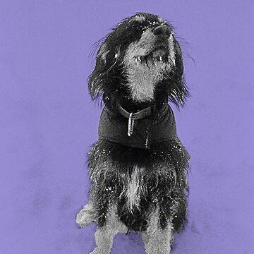 Dexter in the snow - Purple by jondenby