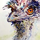Emu again by pamfox