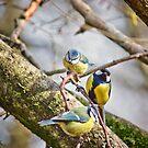 Three Little Birds by Vicki Field