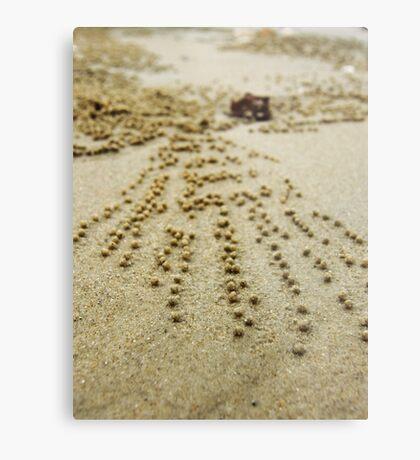 Crab trails at Krabi, Thailand Metal Print