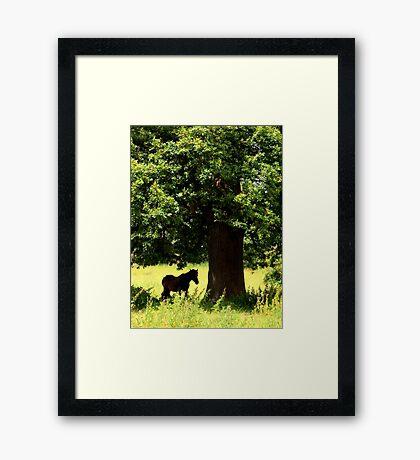 Under the old oak tree Framed Print