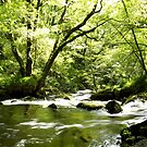 Golitha Falls 2 by mikebov