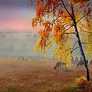 Foggy Country Morning by Igor Zenin