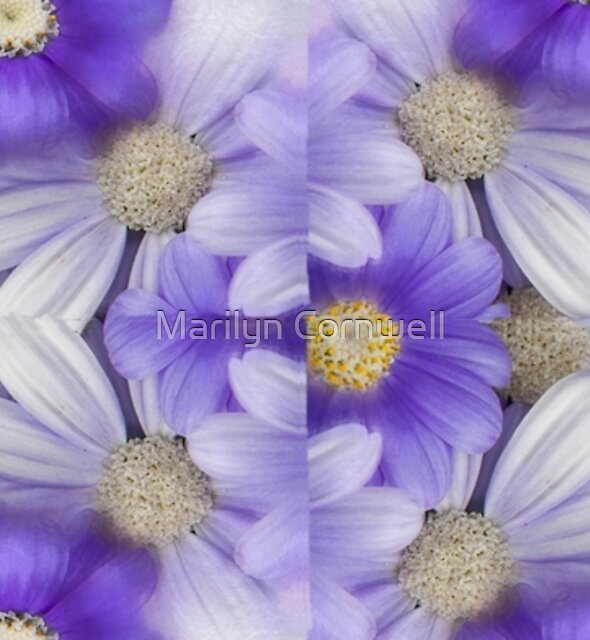 Purple Daisies by Marilyn Cornwell