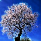 Almond Tree by Bente Agerup
