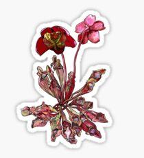 Pitcher Plant, Sarracenia purpurea Sticker