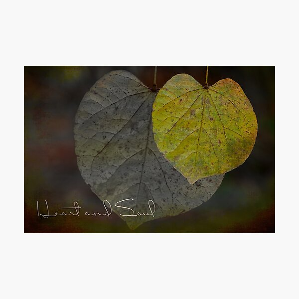 Heart and Soul Moody Leaves Photographic Print