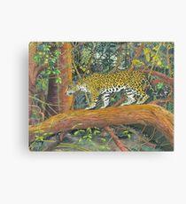 Jaguar Brazil Canvas Print