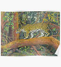 Jaguar Brazil Poster