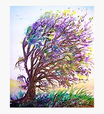 Dreaming Tree  Photographic Print