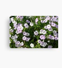 Beautiful pale purple flowers in the garden. Canvas Print