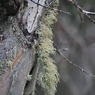 A little Moss. by Lozzar Landscape