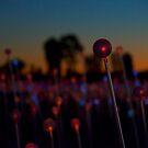 Light on a Stick by Richard Murias