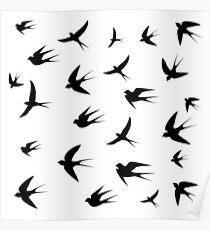 swallows image on white background,vector illustration Poster