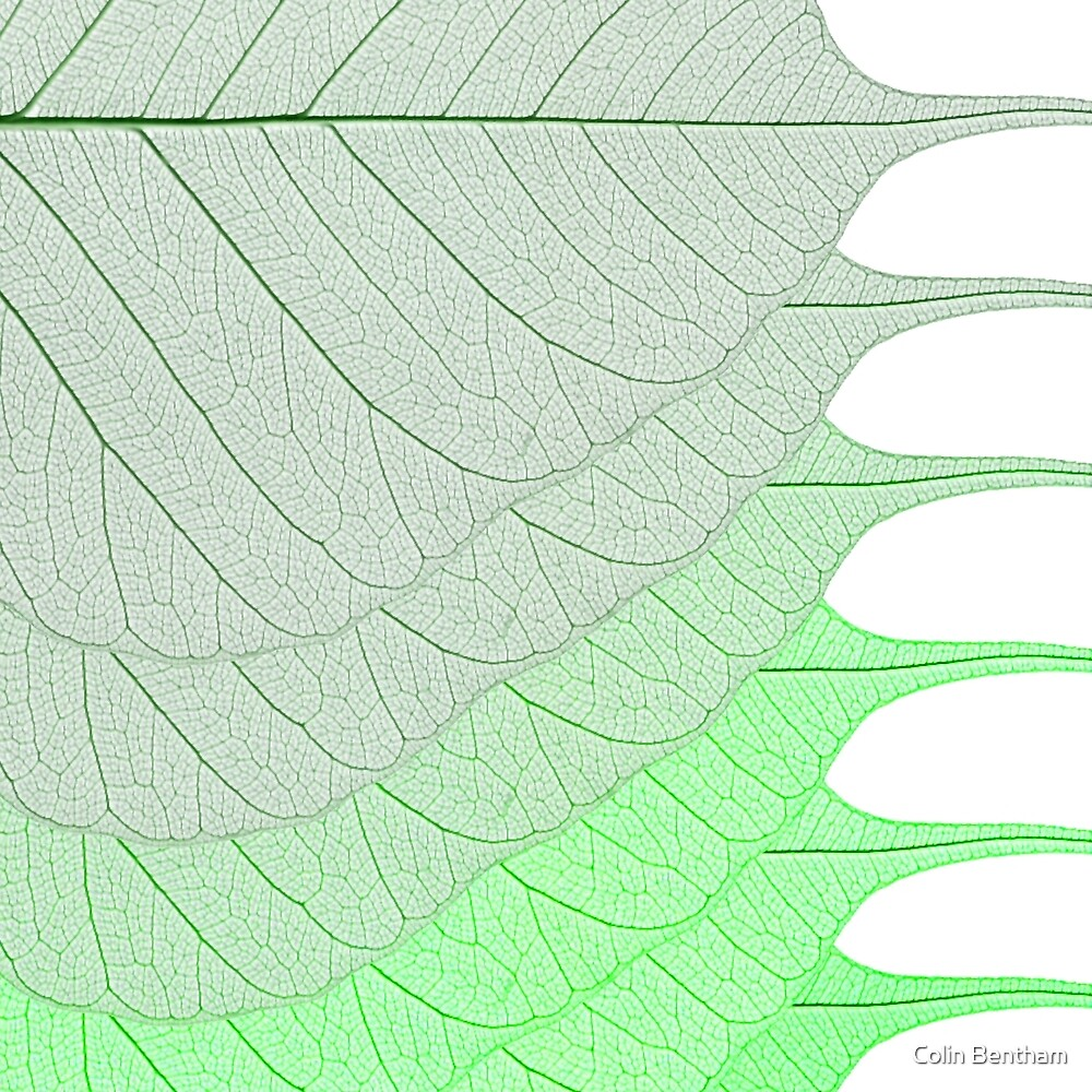 Green Leaves by Colin Bentham