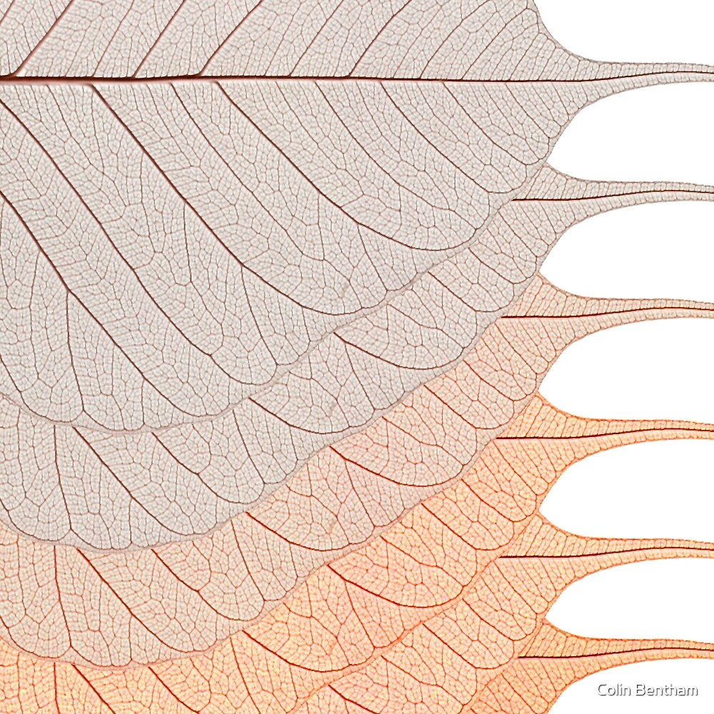 Brown Leaves by Colin Bentham