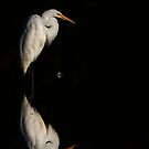 Great Egret reflection by Jim Cumming