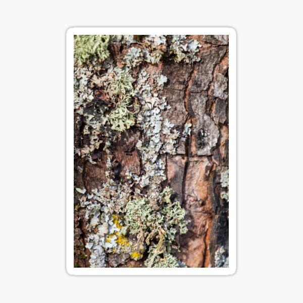 Lichen and Moss on Bark Textured Pattern Sticker